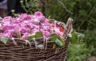 Болгарскае розовое масло Фото